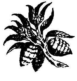 caringe-logo